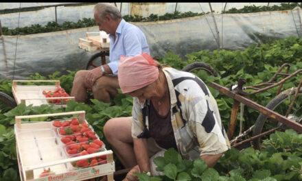 """ll grido di aiuto dei produttori Agricoli di piazza delle Conserve: """"Non metteteci reclusi dentro il cortile della scuola Saffi"""" """""""