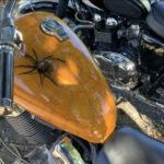 Dal lago di Acquapartita metti un pomeriggio con i motociclisti di HARLEY DAVISON