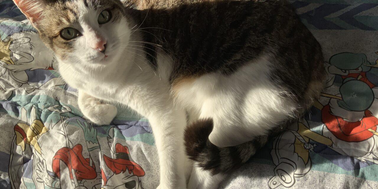"""Un libro tutto dedicato ai gatti """"Gatti che passione! """"a cura di Marina Vicario"""