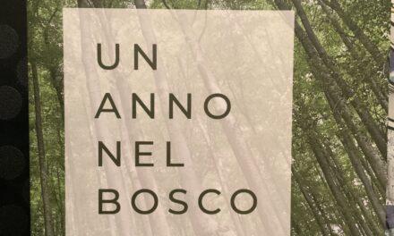 Un anno nel bosco, di Jessica Francesconi